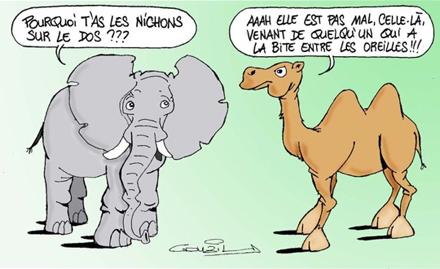 Elephant-Chameau-p